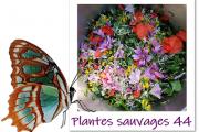 Plantes Sauvages 44-logo